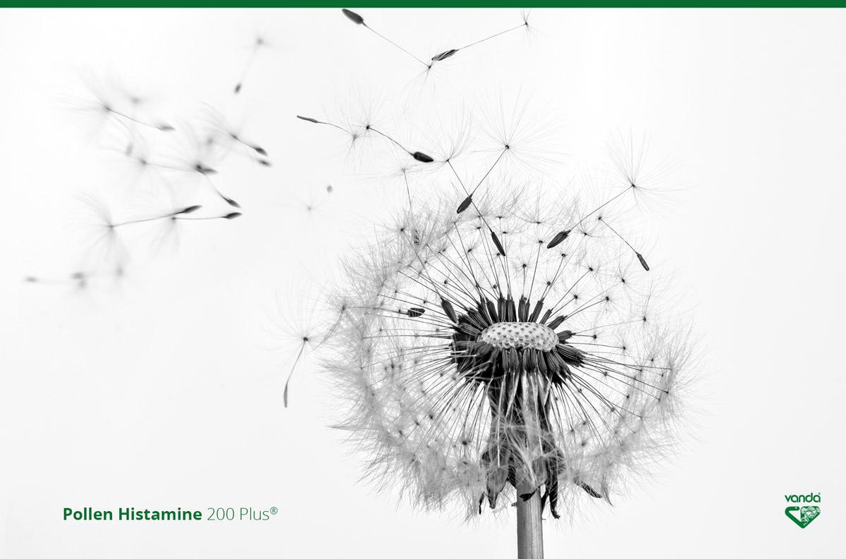 Gli allergeni e la risposta del sistema immunitario