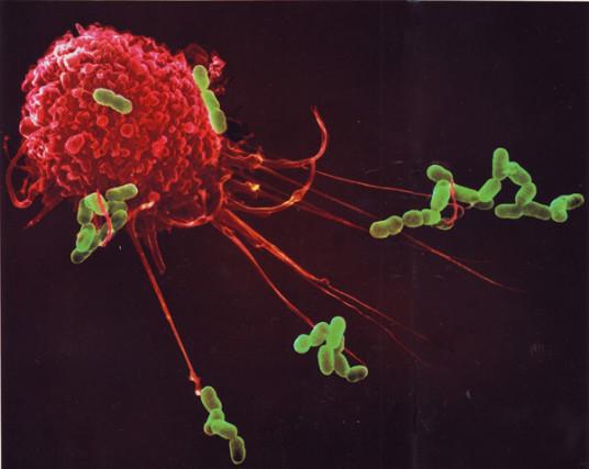 microimmunoterapia omeopatica