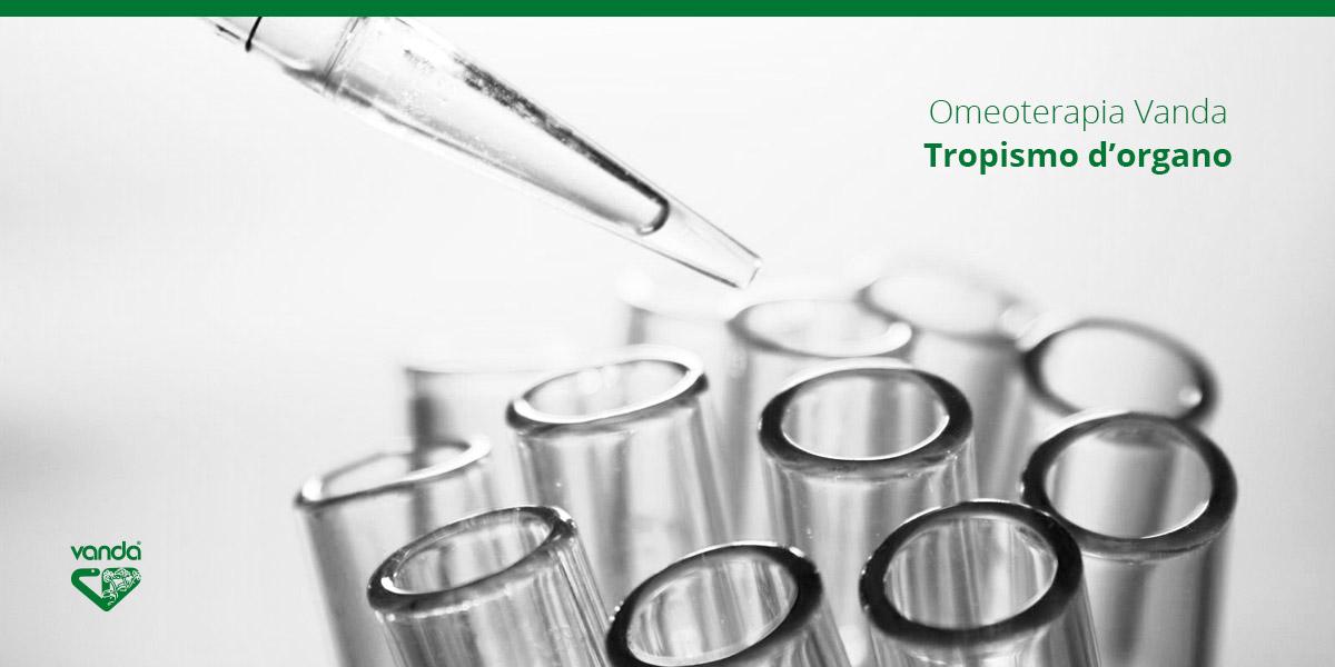 omeoterapia tropismo d'organo