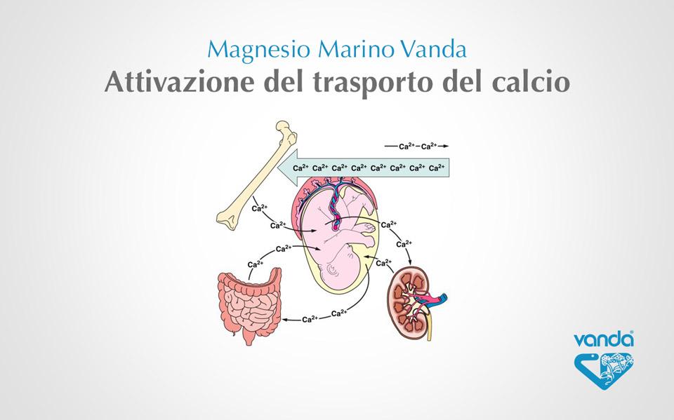 magnesio e calcio per la salute di ossa e denti
