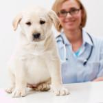 Microimmunoterapia in medicina veterinaria