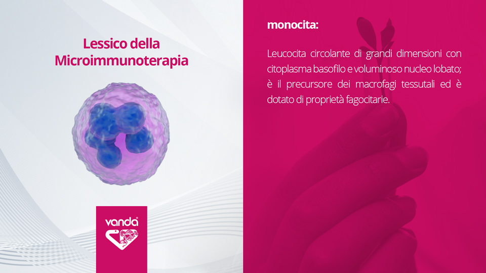 Microimmunoterapia Monocita