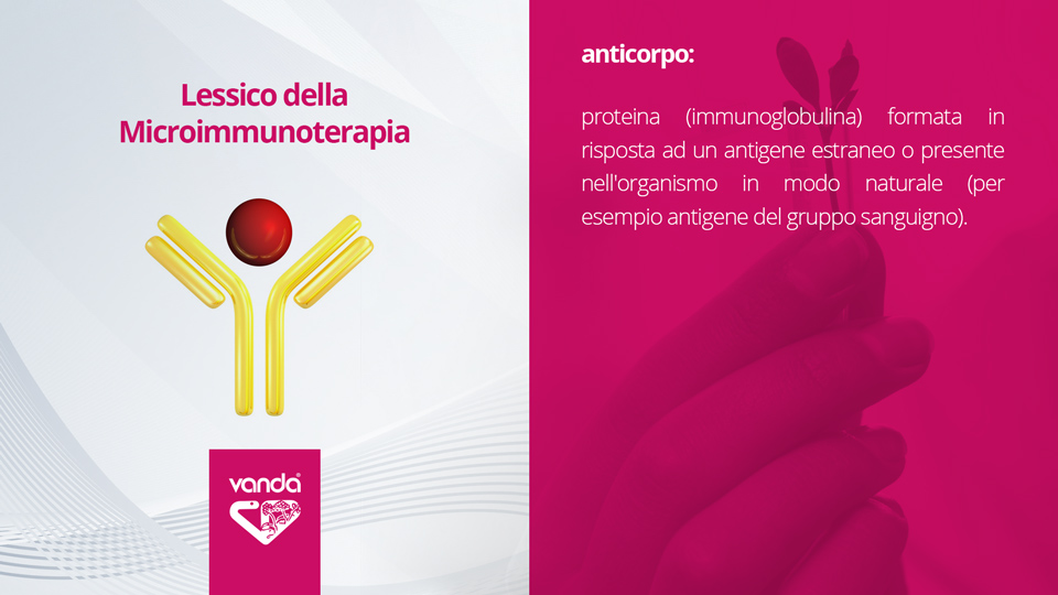 Microimmunoterapia, definizione di anticorpo