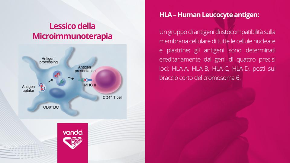 HLA – Human Leucocyte antigen