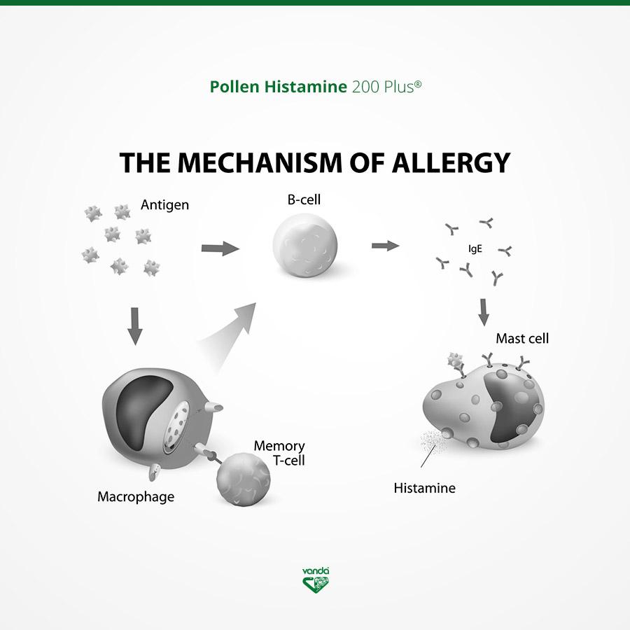 infografica allergia omeopatia meccanismo