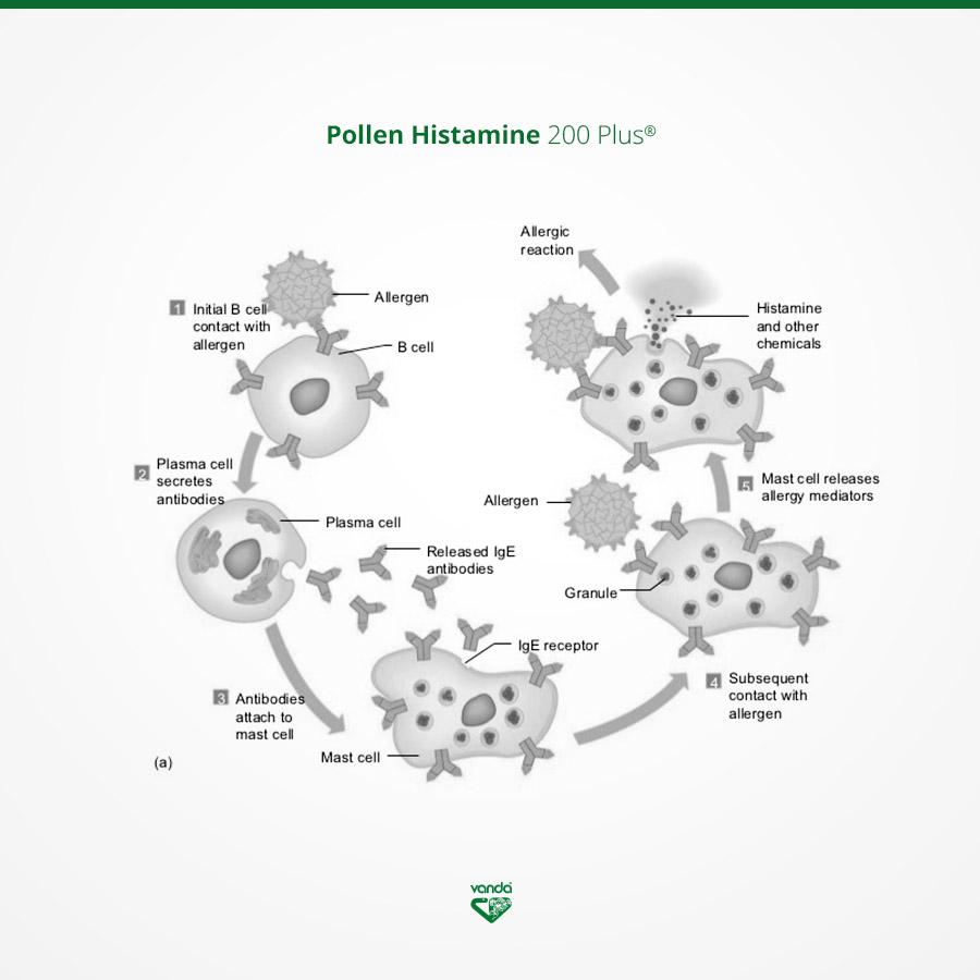 omeopatia allergia infografica sistema immunitario