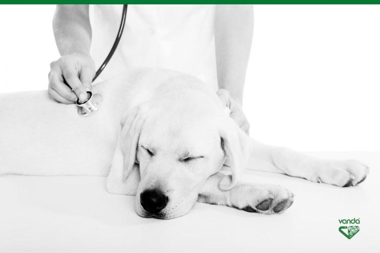 Omeopatia veterinaria e Microimmunoterapia