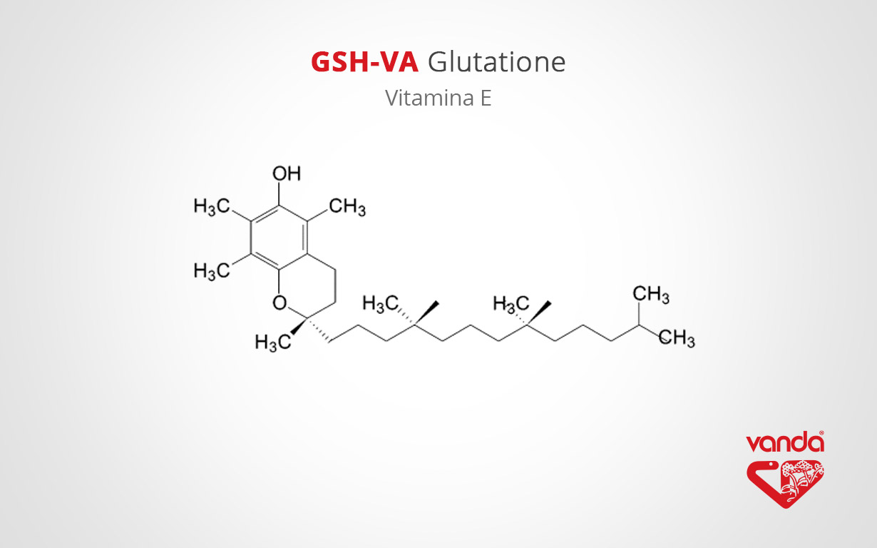vitamina E acetato (Integratore di glutatione)