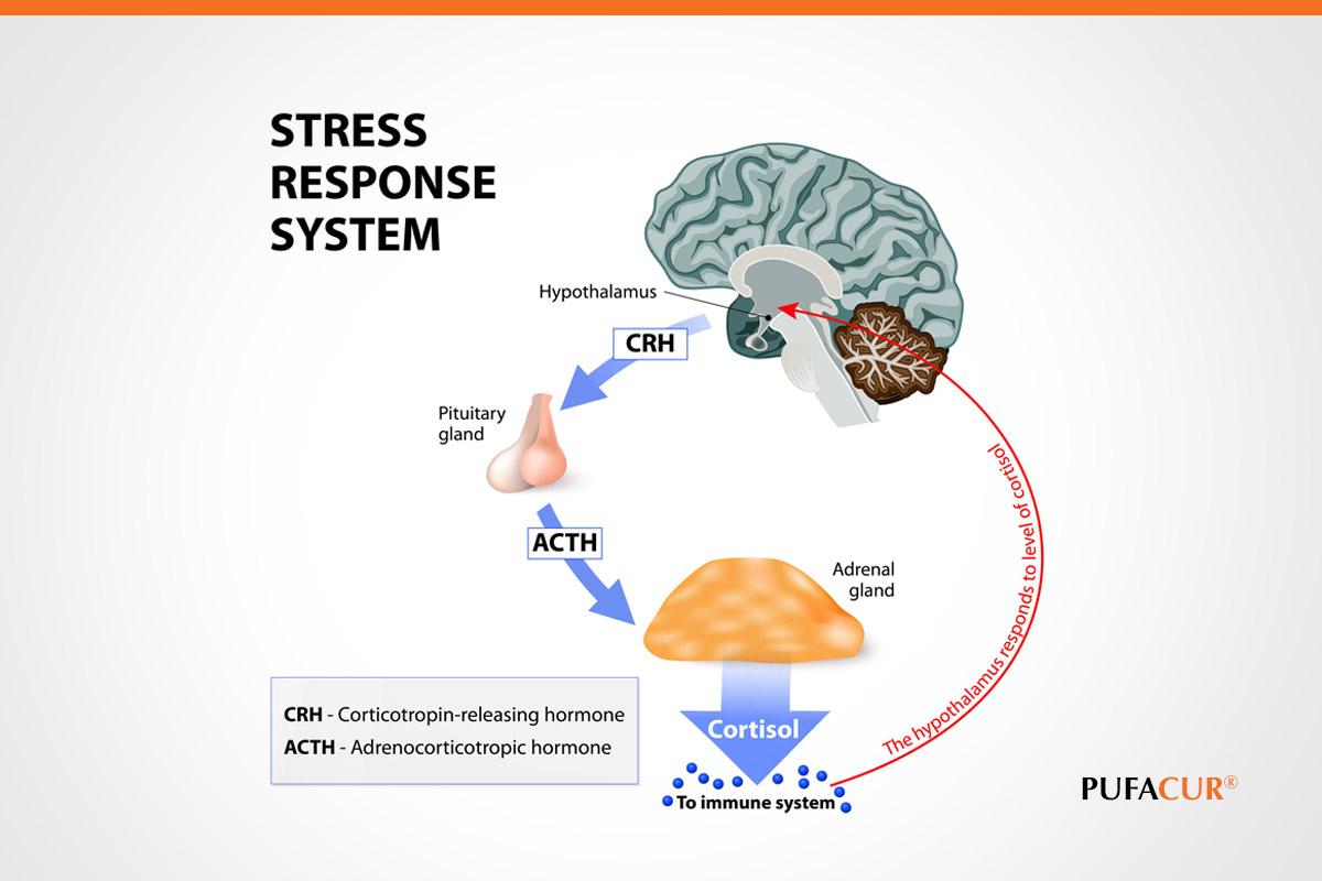 stress response system
