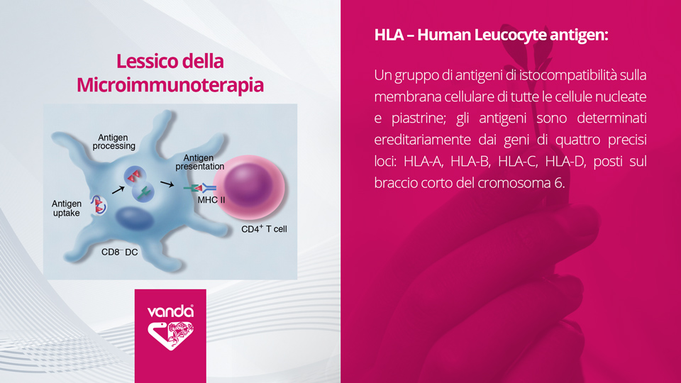 HLA – Human Leucocyte antigen