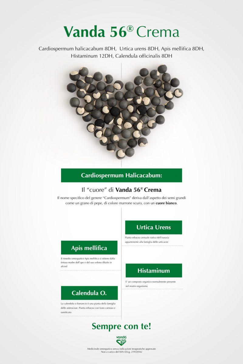infografica pomata omeopatica con cardiospermum