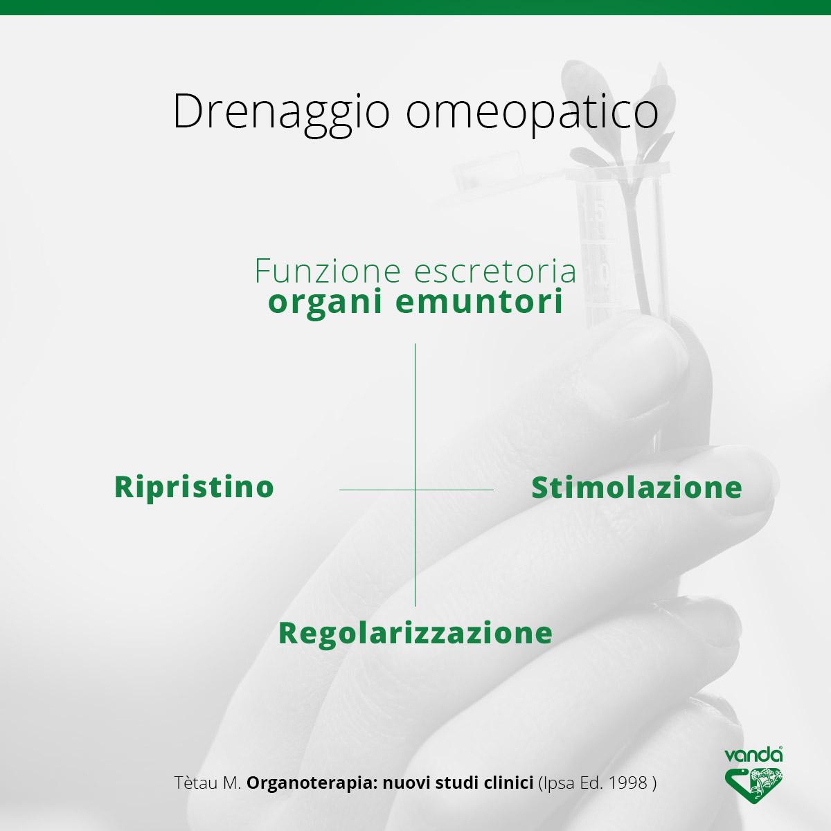 drenaggio omeopatico fegato e reni
