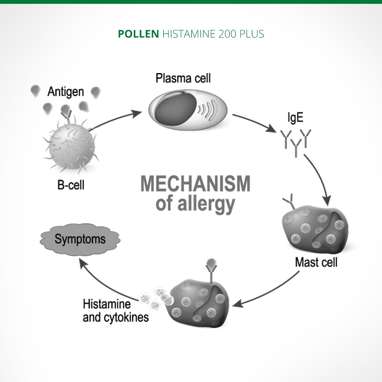 omeopatia e allergia