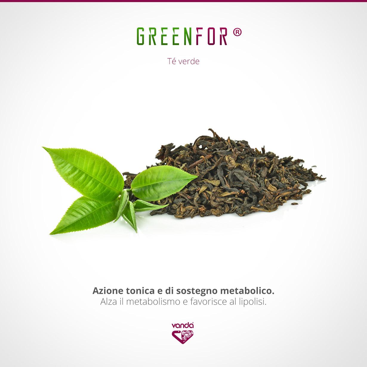 Tè verde, termogenico naturale