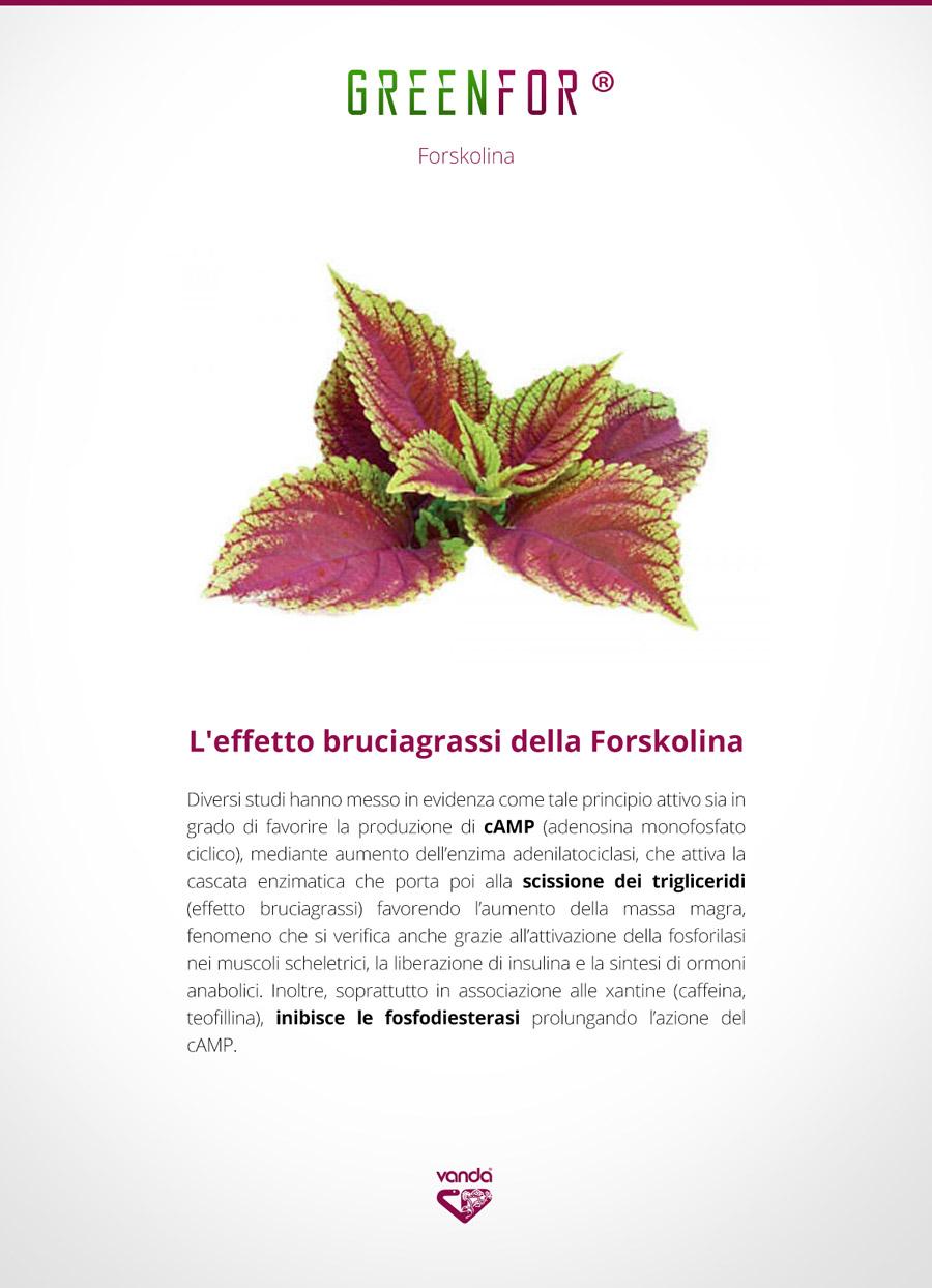 Forskolina, infografica