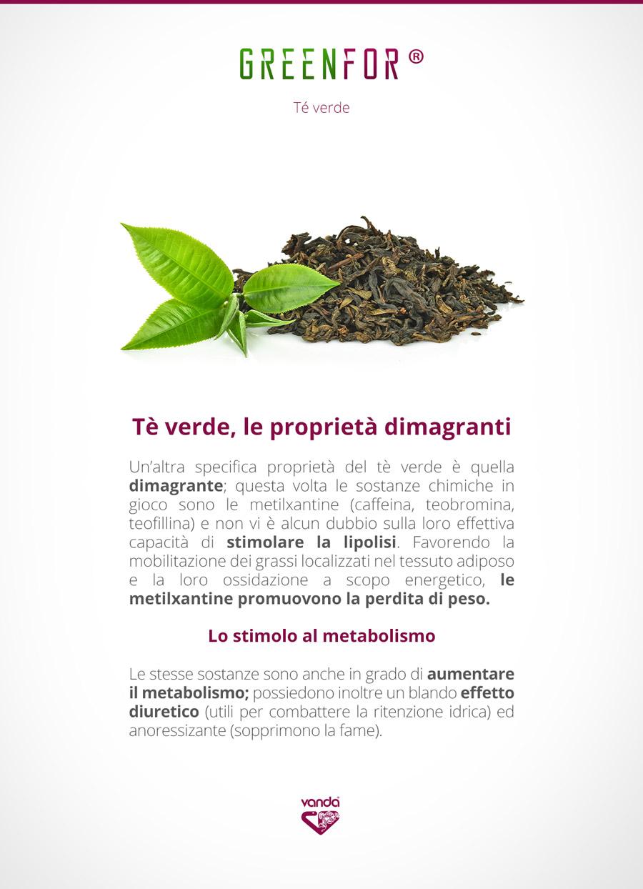 te verde, proprietà dimagranti e antiossidanti. Lipolisi e dimagrimento