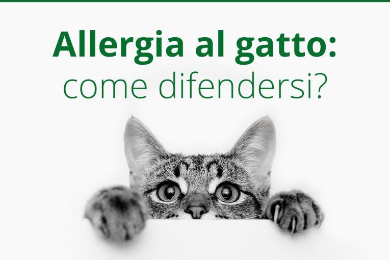 Allergia gatto: i sintomi e le cure