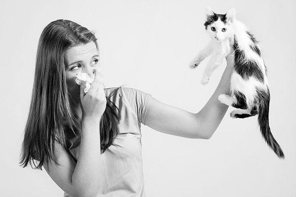 le allergie al gatto sono sempre più diffuse