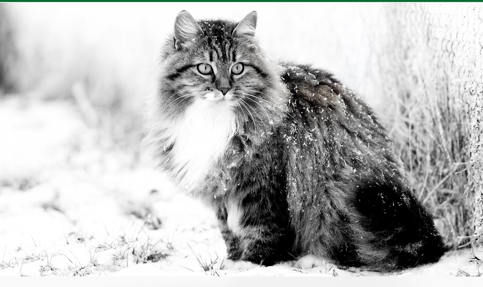 allergia gatto: i rimedi omeopatici