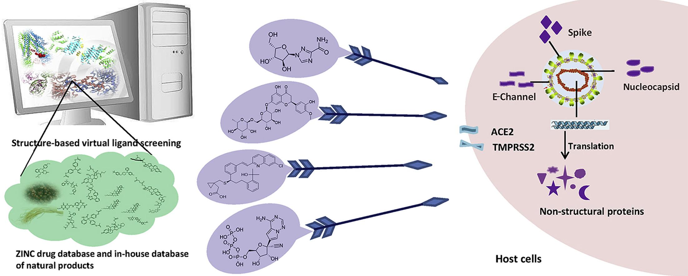 infografica: analisi di bersagli terapeutici per SARS-CoV-2 e scoperta di potenziali farmaci mediante metodi computazionali