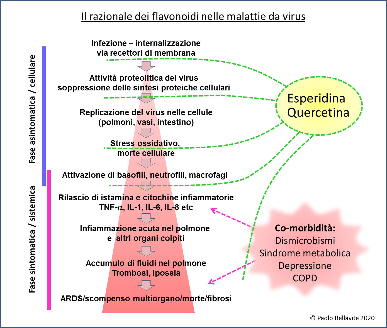 esperidina e razionale flavonoidi nelle malattie virali